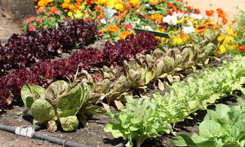 огород овощи +и фрукты