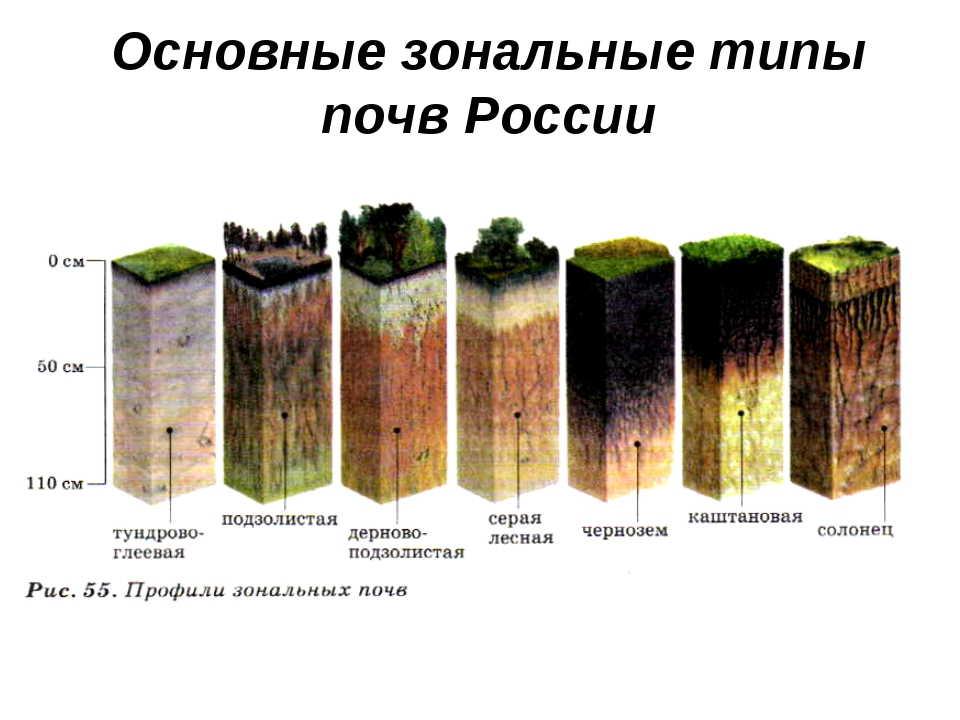 выращиваем овощи +на огороде