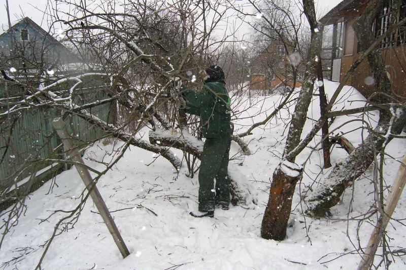 обрезки дерева
