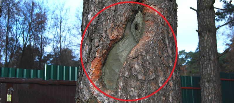 дупло +в дереве лечение