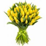 тюльпаны луковичные