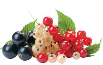 ягода+смородина+фото