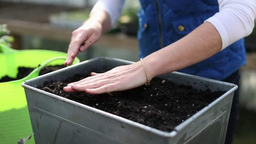 посадка семян томатов +на рассаду