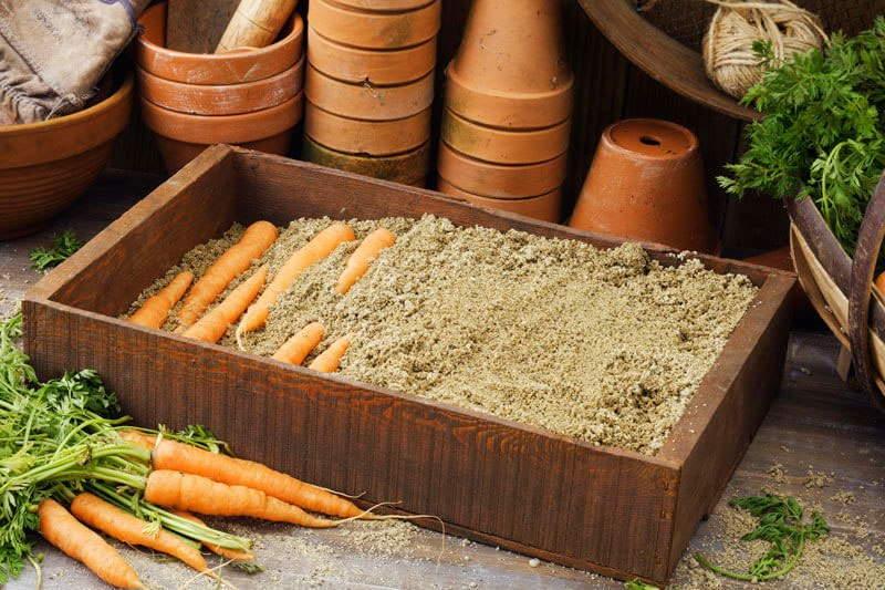 хранение моркови +на зиму
