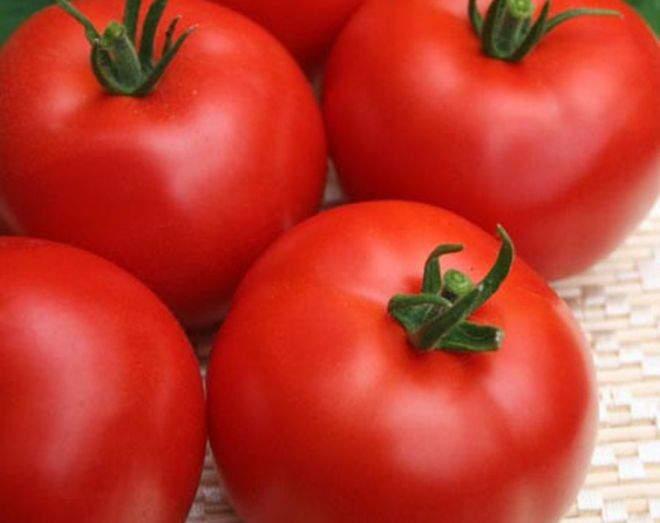 томат ураган f1 отзывы