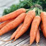 огород+морковь+выращивание+храненивредители