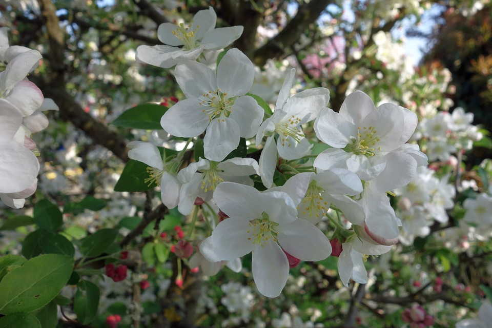 подкормка садовых деревьев +и кустарников
