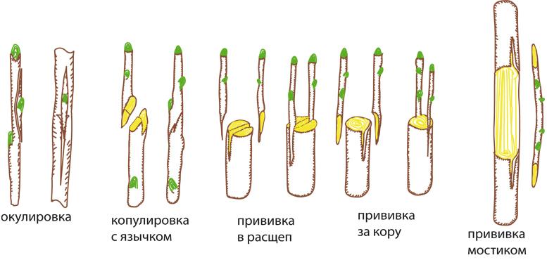 обрезка+прививка+секатор+садовый нож