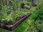 огород+посадка+совместимость растений