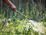сад+огород+инвентарь+садовый инструмент+опрыскиватель