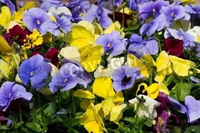 сад+однолетники+цветы+весна