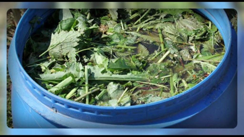 зеленое удобрение +из крапивы +и травы