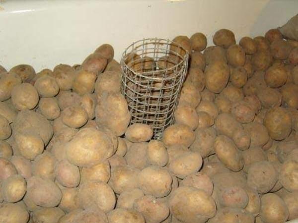 хранение картофеля +и овощей