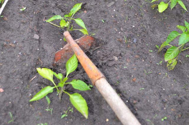 борьба с сорняками+прополка+фото