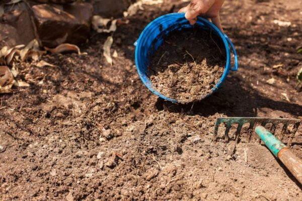 подготовка почвы под томаты +в теплице