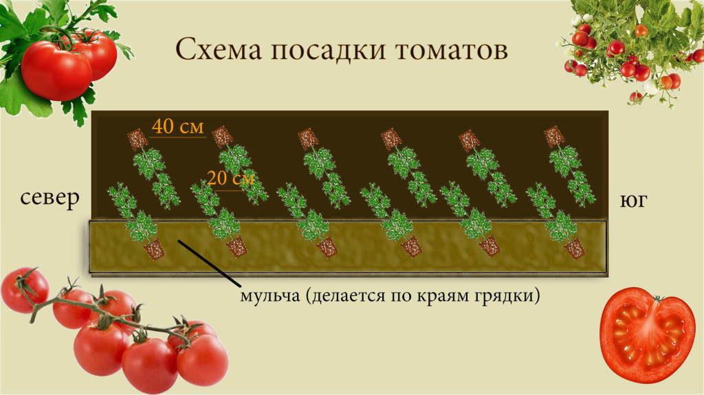 томатов +в теплице схема