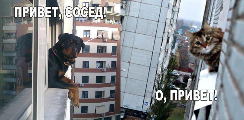 привет сосед через