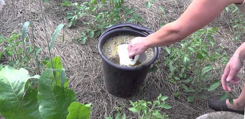 удобрение +и подкормка томатов