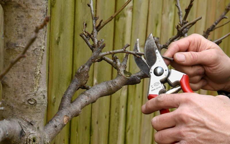 обрезка деревьев +в саду