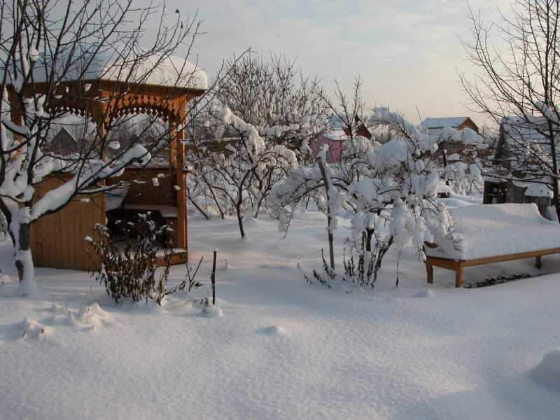 зимний+сад+фото