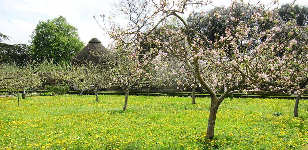 сезонные работы во саду ли в огороде май