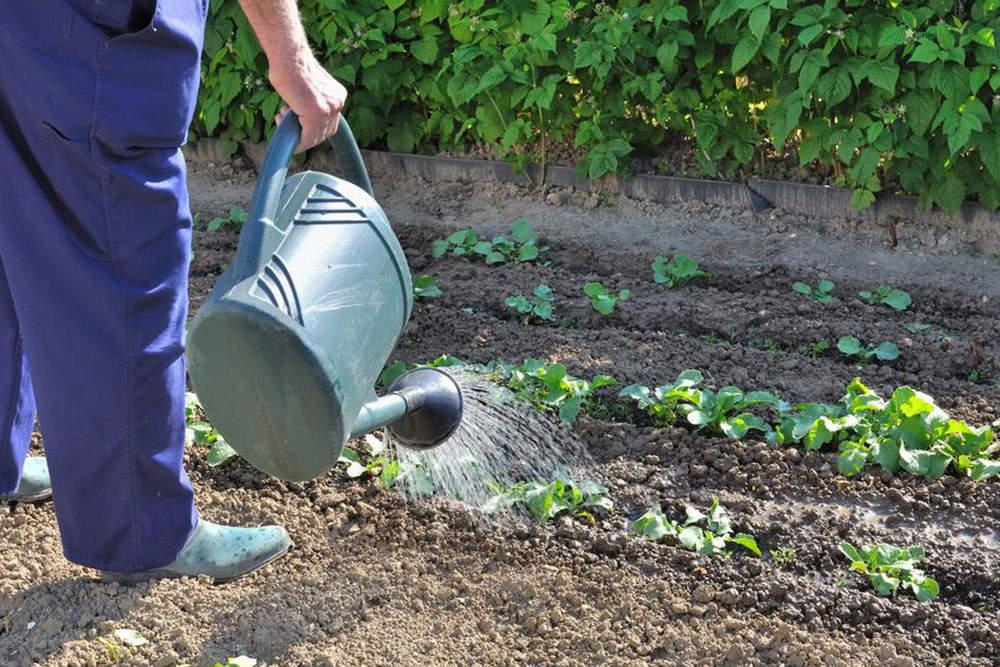 сезонные работы во саду ли в огороде июнь