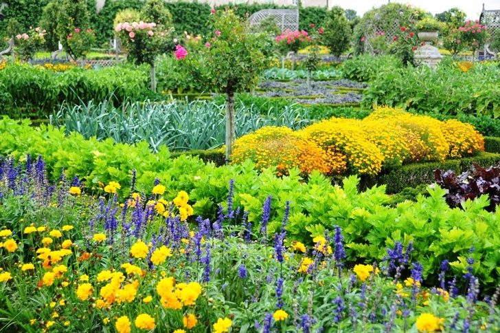 сезонные работы в саду июль