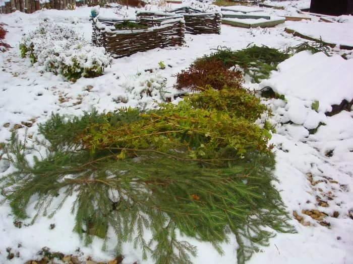 сезонные работы в саду в декабре