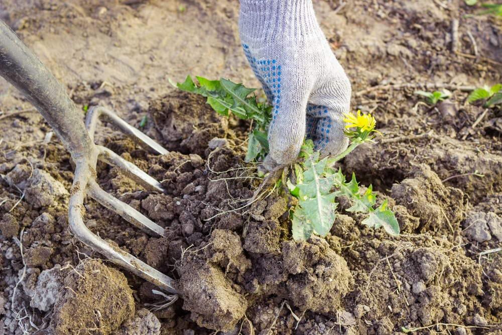 борьба +с сорняками +на огороде