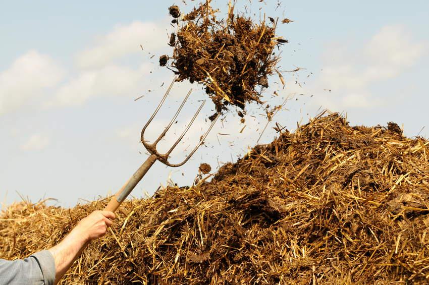 органические удобрения почвы