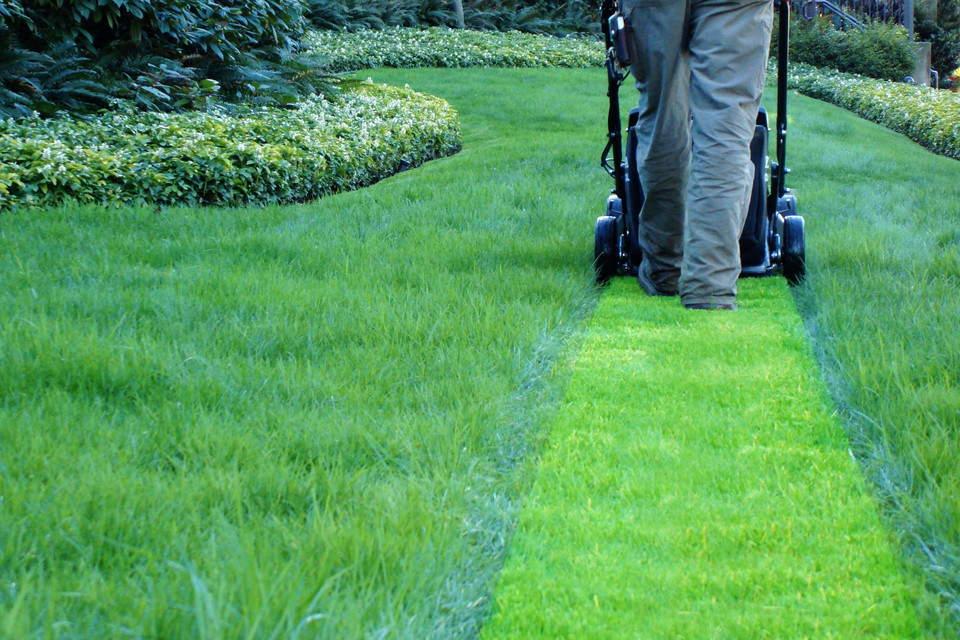 трава после скашивания газона