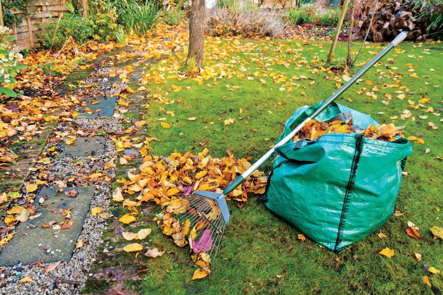 уборка листвы +с газонов