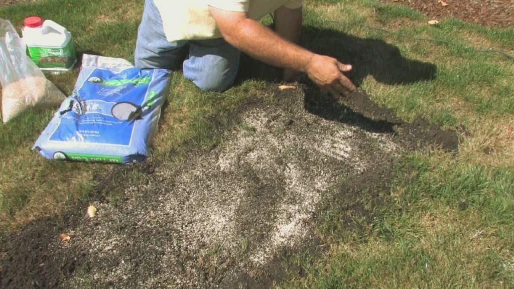 реставрация газона +своими руками
