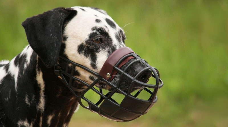 намордники +для собак пород