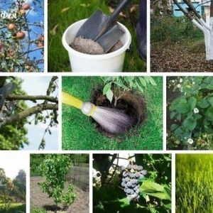 сентябрьские работы +в саду +и огороде