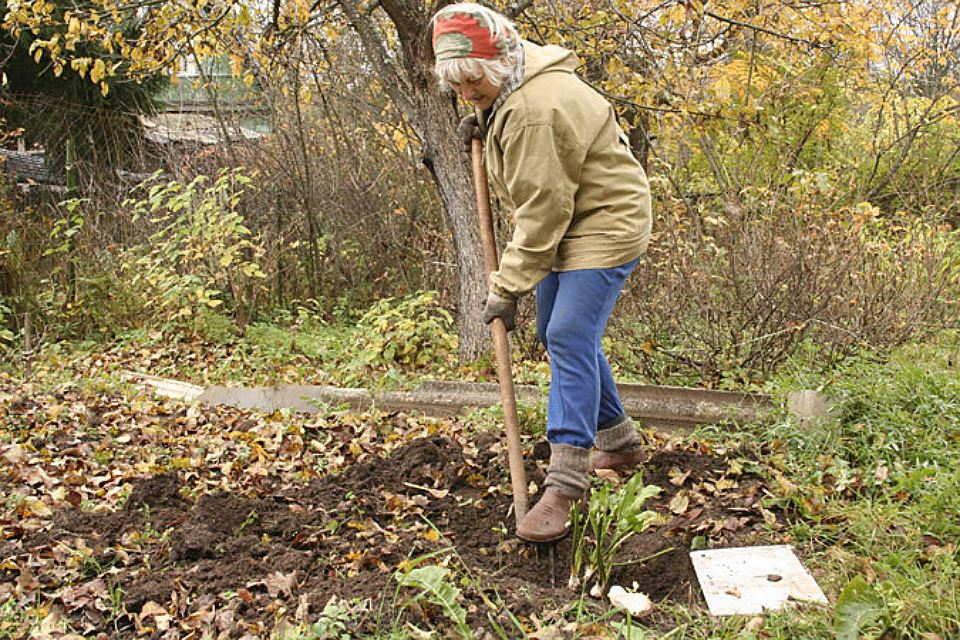 огородные заботы+фото