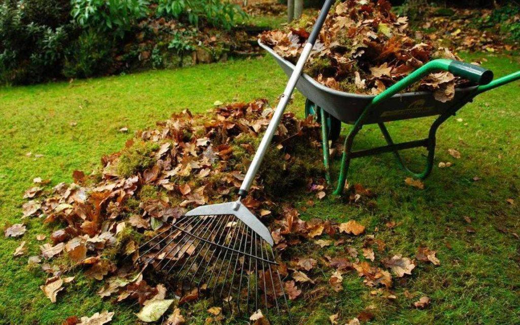 сбор листвы +фото