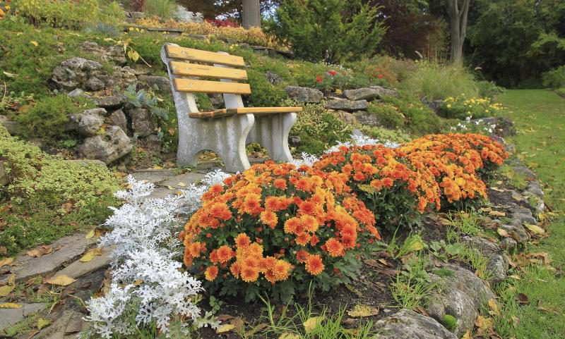 цветник осенью фото