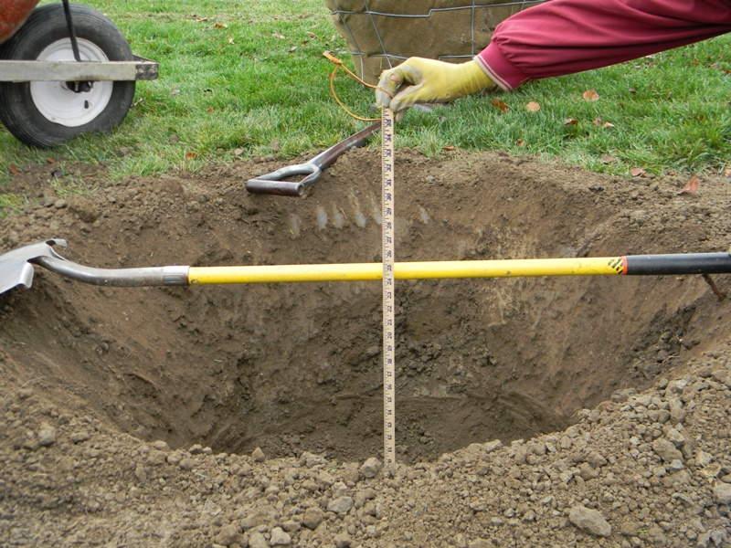 подготовка посадочной ямы под сливу осенью