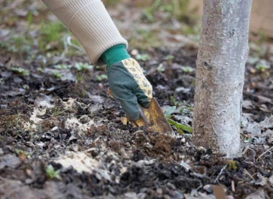 слива почва +для посадки