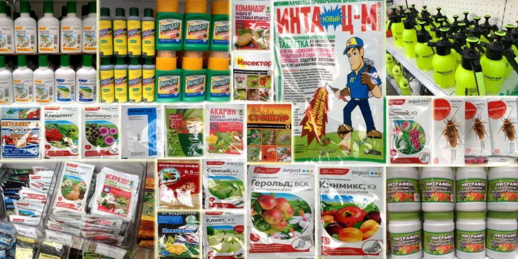 садовые вредители +и борьба +с +ними