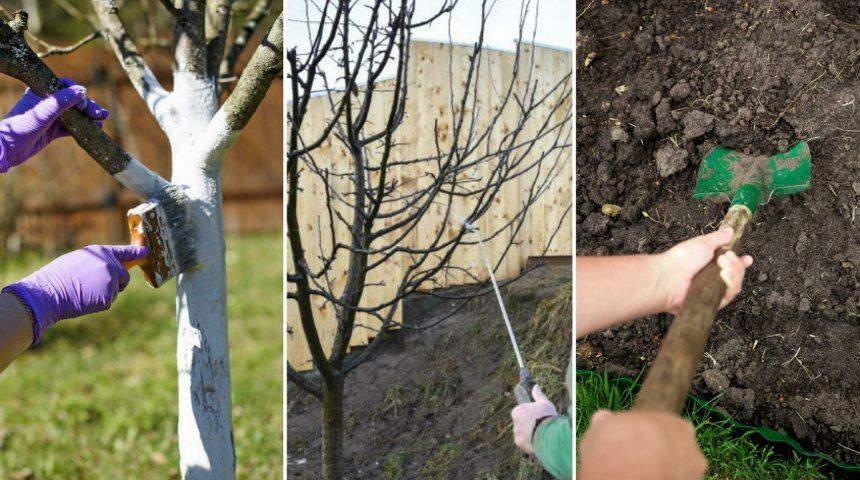 защита +от садовых вредителей+фото