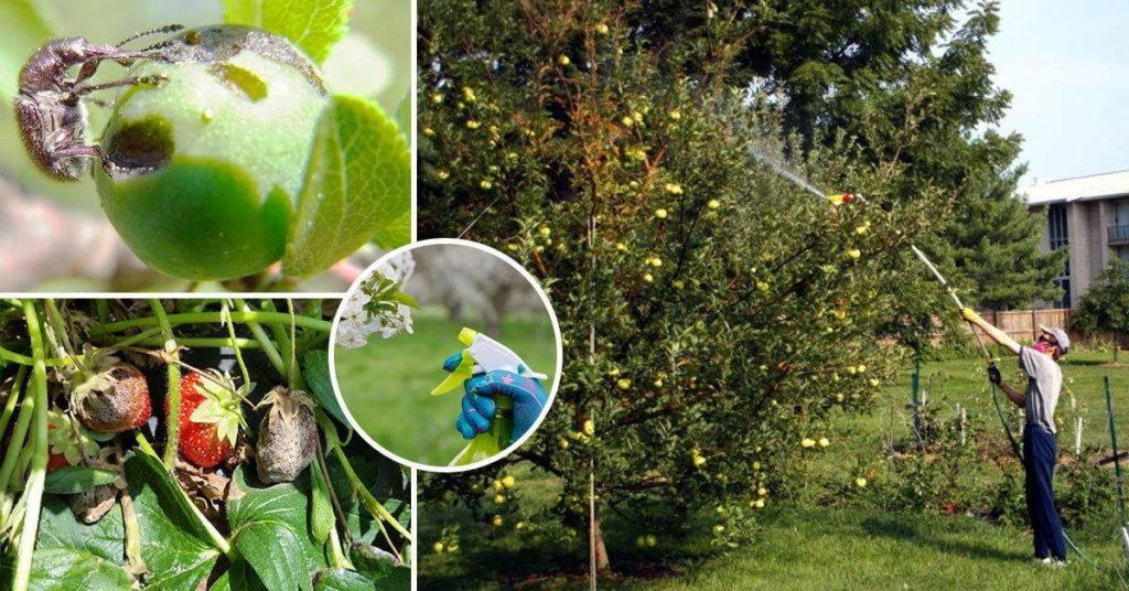 опрыскивание растений +от вредителей