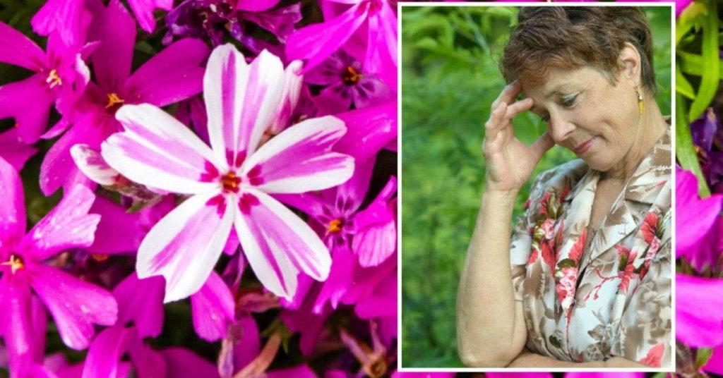 воровать цветы