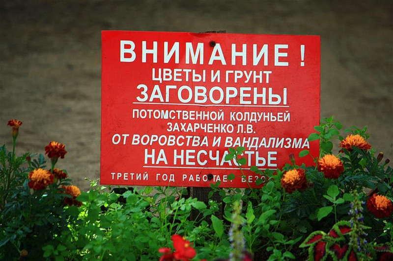 можно ли воровать цветы