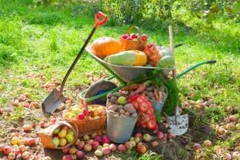 осенние работы +в саду +и огороде