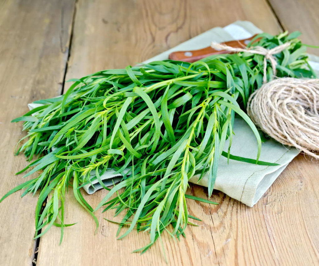 эстрагон трава свойства