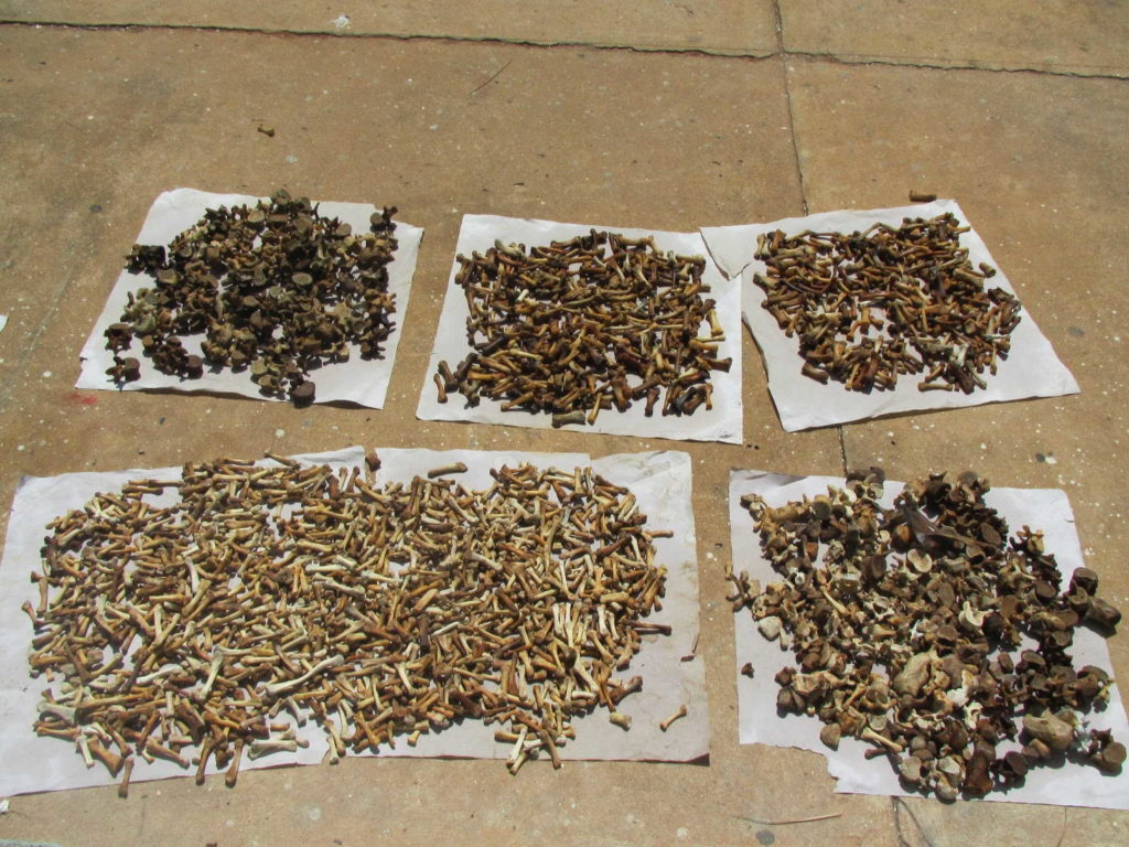 заготовка +и хранение семян