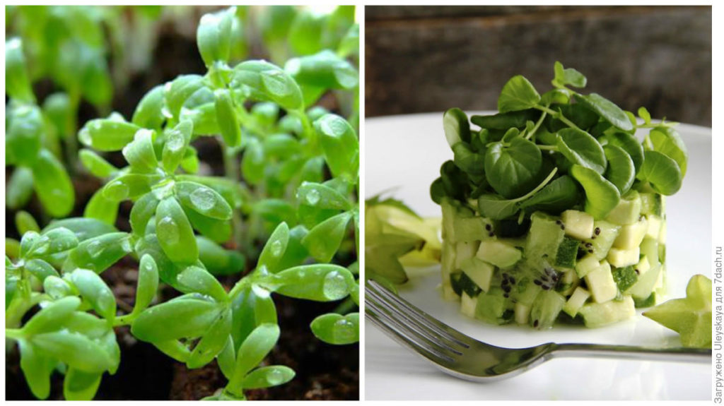 кресс салат рецепты