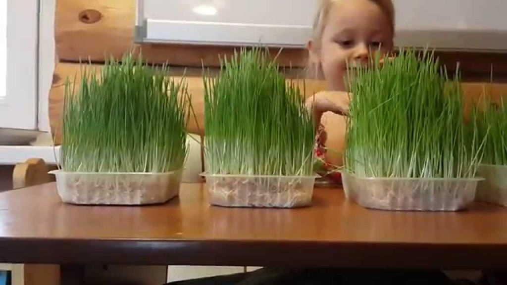 +как посадить зеленый лук семенами